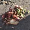 Cherry Like fruit cut up
