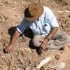 Bill harvesting white clay-cu