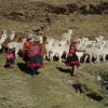 peru-andes-P-ANDES-6 Q'ero women herding-great